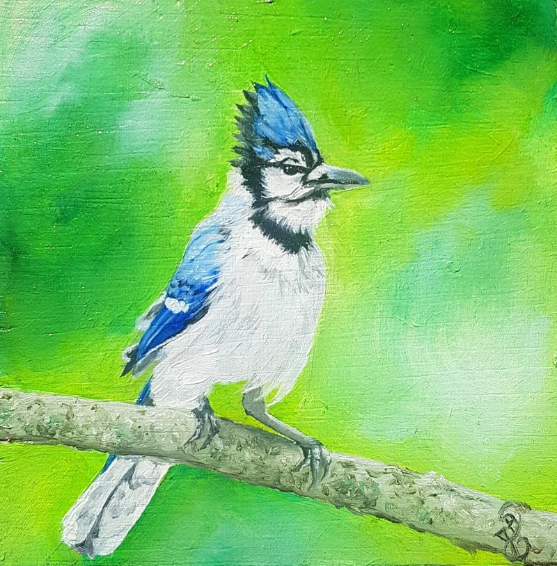 Blue Jay, oil on wood, 12x12cm, Available
